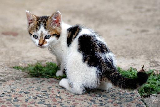Das Kätzchen und die Stricknadeln