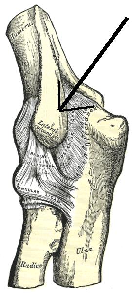 By Henry Gray (Gray's Anatomy) [Public domain], via Wikimedia Commons