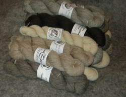 Yarn from North Ronaldsay
