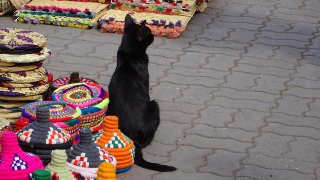 Körbe und Katze