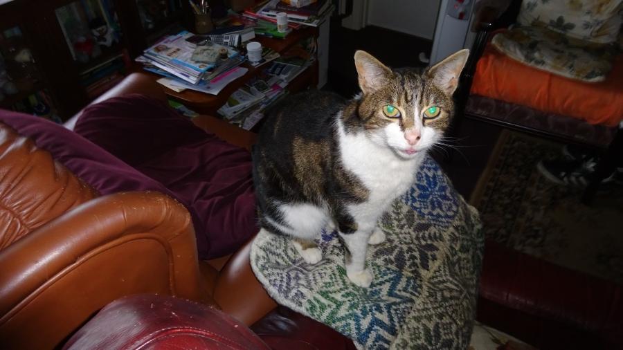 Tommy Mouats Katze