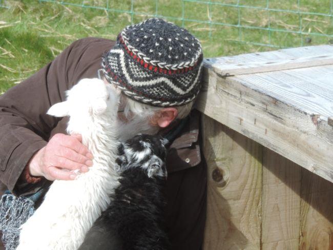 Schafs-Kommunikation