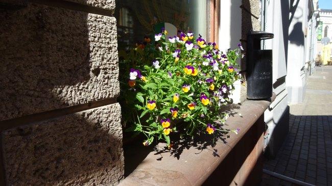 Blumenkasten in der Kaleju Iela