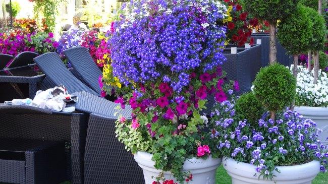 Blumen an der Bierbar