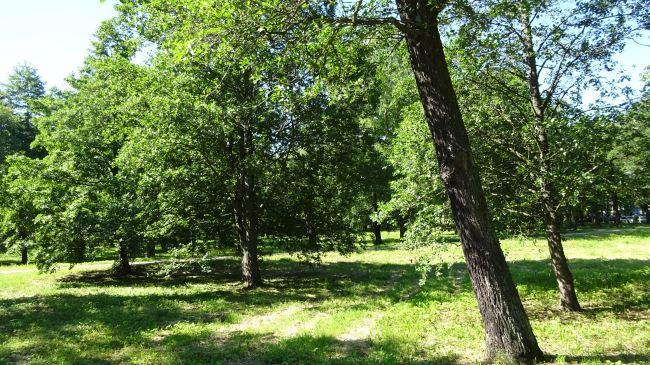 Park in Kopli