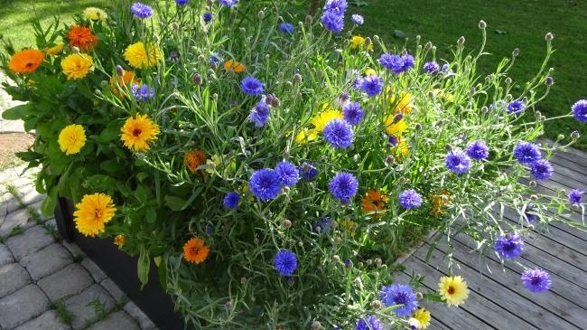 Blumen in Viljandi