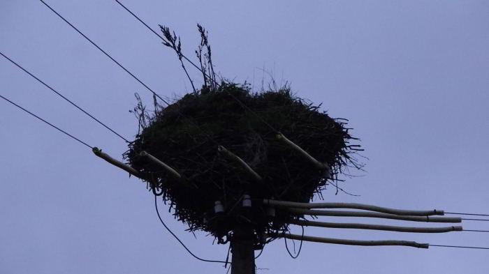 Ein elektrifiziertes Storchennest