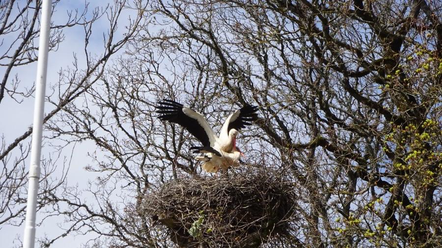 Familiengründung im Nest