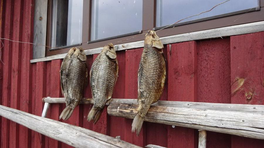 Frischer Fisch?