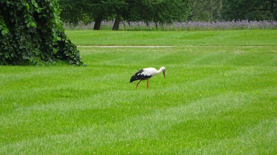 Ein Storch aus Olustvere