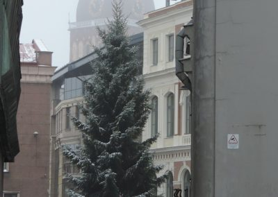 The yet undressed Christmas Tree at Ratslaukums Square