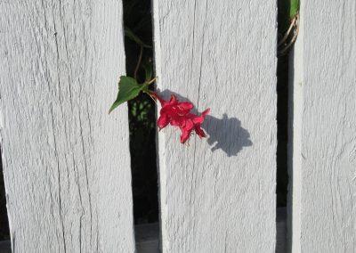 Es blüht in allen Gärten