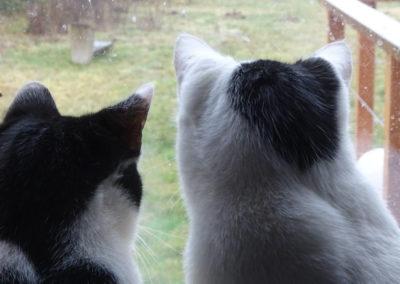 Katzen und Regen