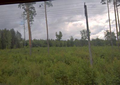 Lettischer Wald