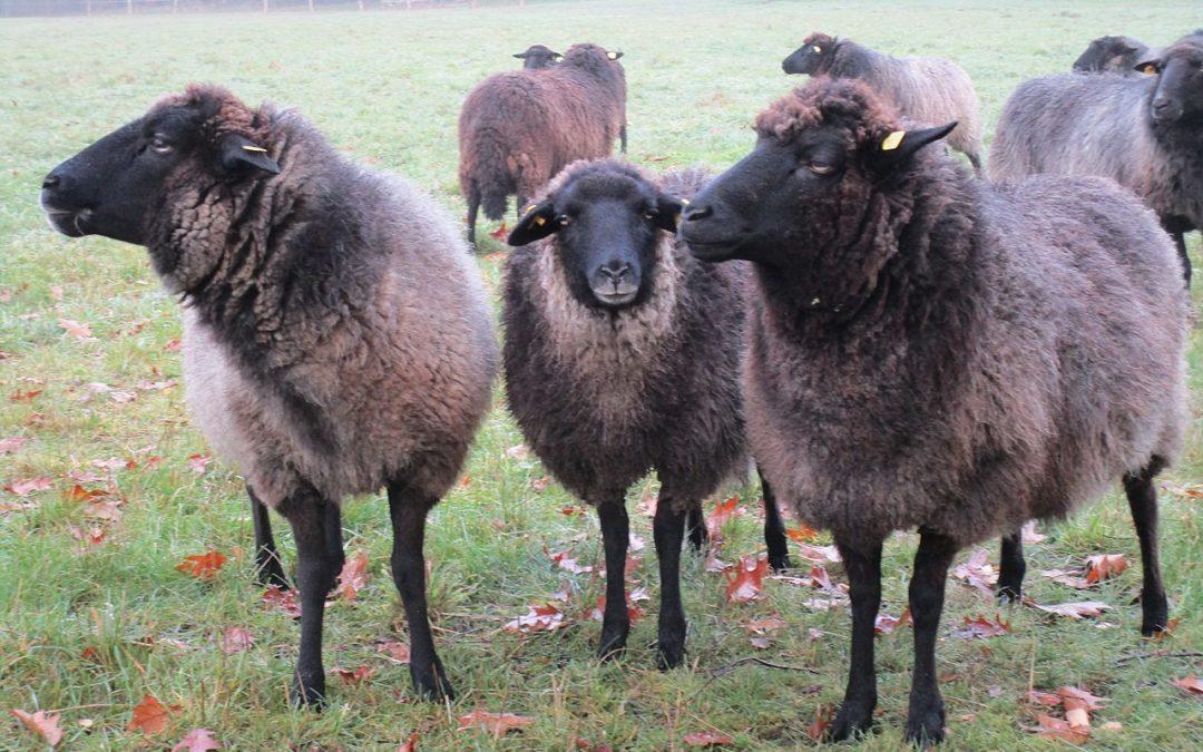 Mönchguter Bauernhochzeit +Wolle for Future