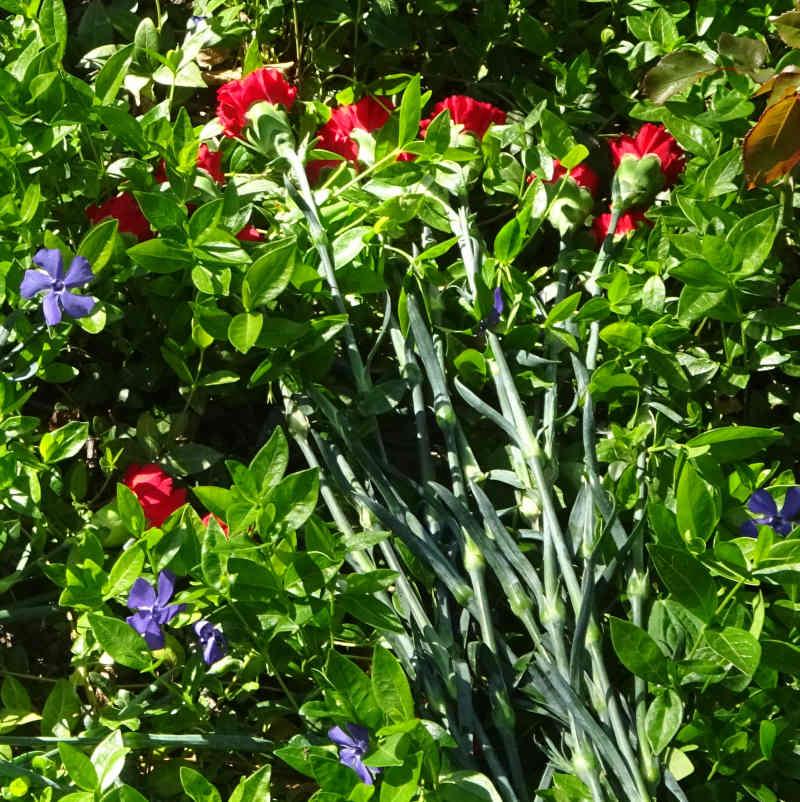 Blumen auf dem Grab